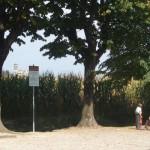 14.Mapello