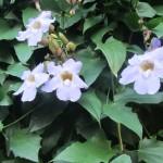 IMG_4123..belli i fiori veramente belli..ma